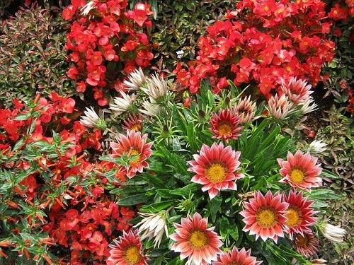 Best Organic Flowers for Your Garden