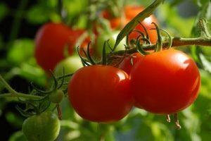 best soil for tomato plants