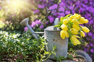 Watering Organic Garden