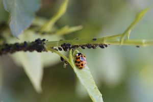 Organic Pest Control for Vegetables