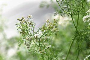 Best Organic Pest Control