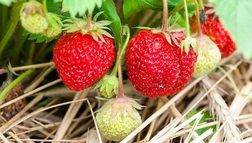 best organic nutrients