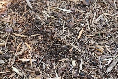 Dry Organic Material