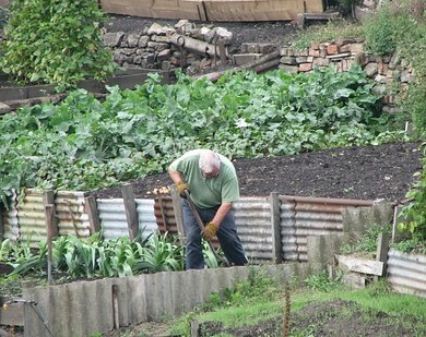 Crop rotation to control weeds
