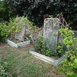 Organic weed control in vegetable gardens