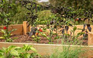 Organic Raised Beds 1