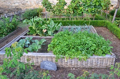 Growing an Organic Vegetable Garden in Raised Beds