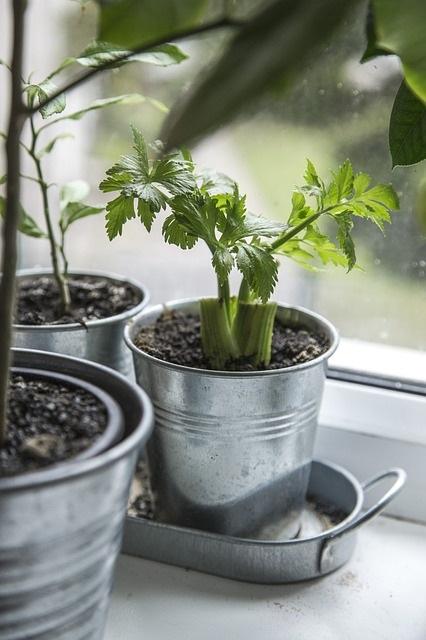 Growing Indoor Garden