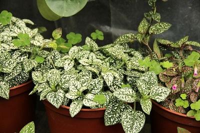 Beginners Guide to Indoor Organic Gardening