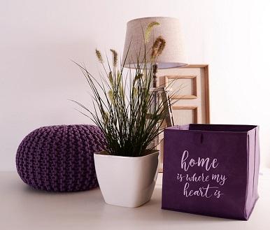 Organic Indoor Plant