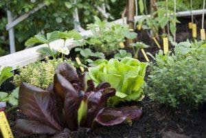 Organic Vegetable Pots