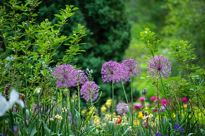 Gardening: Organic vs Non-Organic