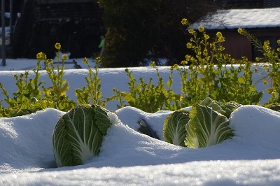 Winter Vegetables