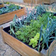20 Organic Gardening Tips